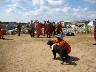 捜索災害救助犬育成・訓練・出動のイメージ