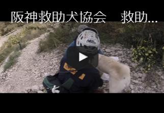 FireShot Capture 48 - 近畿の災害救助犬の育成、捜索ボランティア活動なら阪神救助犬協会 - http___hanshin-rescuedog.org_